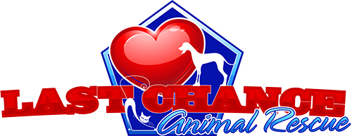 Cat and Dog Rescue Serving D C , Maryland and Virginia